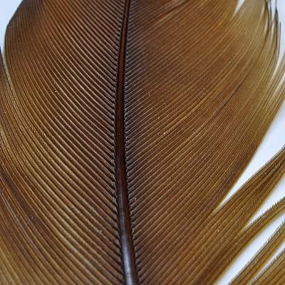Condor Sub. - brown