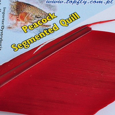 Peacock Segmented Quill - Fl. Red