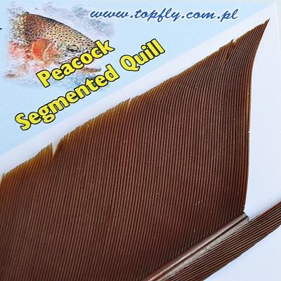 Peacock Segmented Quill - Cinnamone