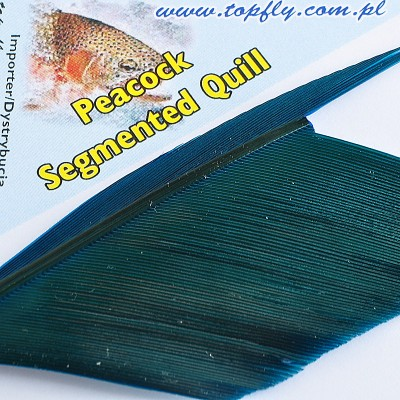 Peacock Segmented Quill - Teal blue