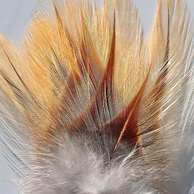 Coq de Leon - indio paziso