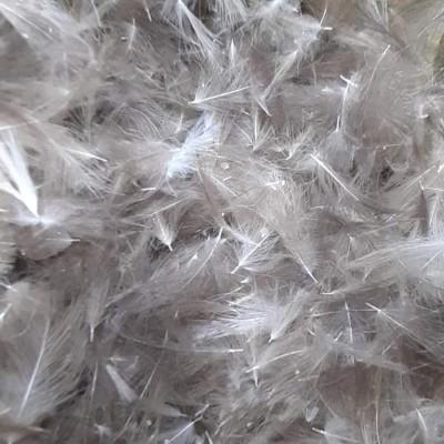 CDC - wild duck (0,5 gram) GRAY